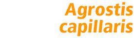 Proselect Agrostis capillaris Heritage