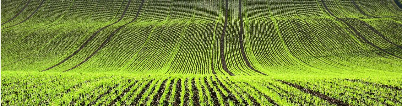 Otros Icl Specialty Fertilizers